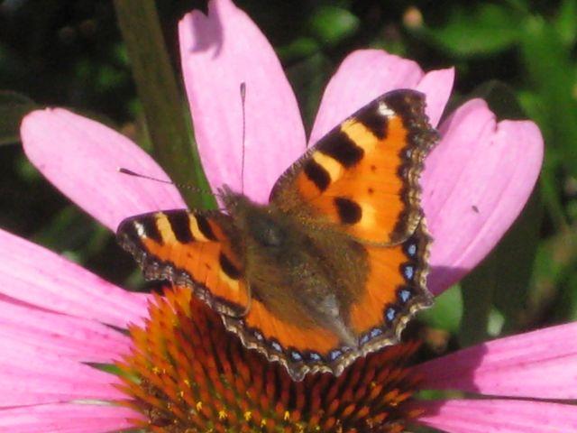 Liebe Wilkenrotherinnen und Wilkenrother, angenommen, vier oder fünf Gartenbesitzer würden sich zusammenschließen, um an einem Augustwochenende in 2011 ein kleines Programm für Gartenfreunde anzubieten – zB morgens um 11 Uhr […]