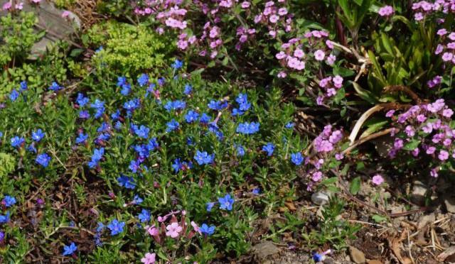 Offene Gartenpforte im Juni
