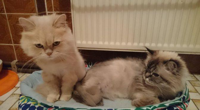 Katzenunterbringung gesucht